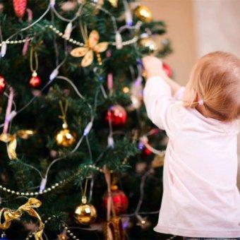 Когда начинается продажа живых елок в Краснодаре?