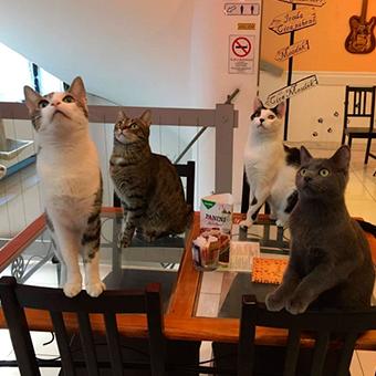 Кафе с животными в Краснодаре